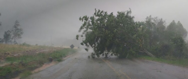 Vendaval derruba árvores e destelha casas em Roncador