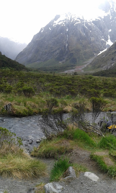 fjordland-national-park-stream