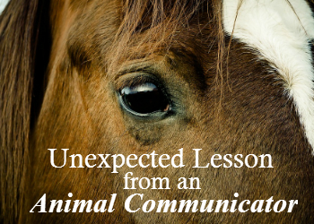 Unexpected Lesson from an Animal Communicator