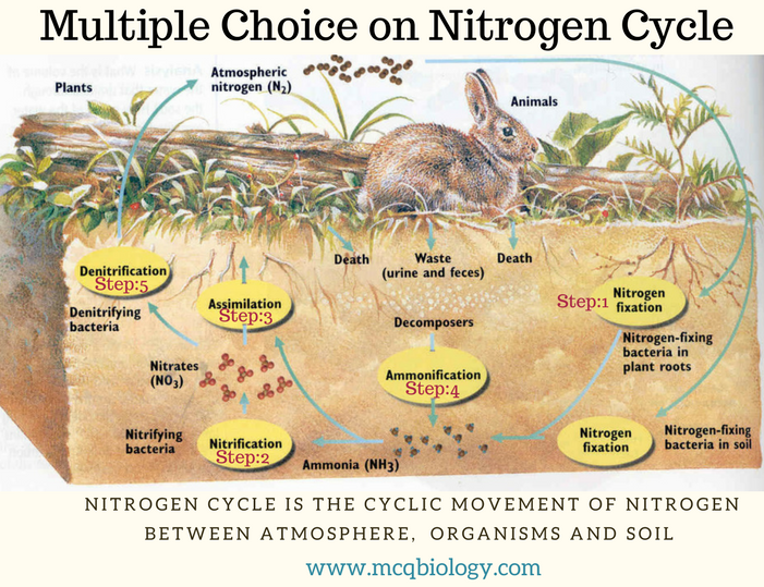 Multiple Choice on Nitrogen cycle