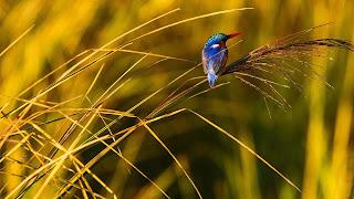 Bird of manas national park