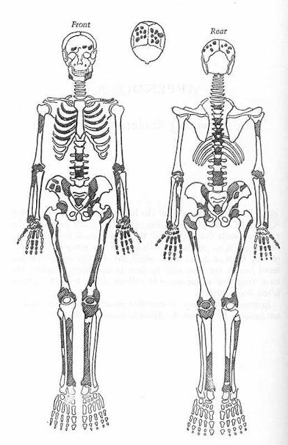 Conjunto dos ossos de São Pedro achados no túmulo