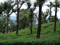Agri land for sale in Ooty