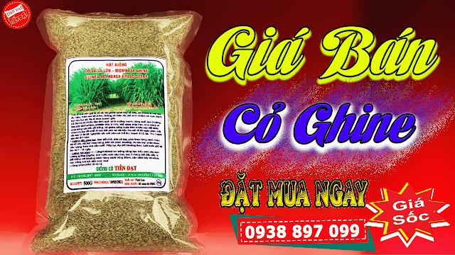 Giá cỏ ghine mombasa 350k gói 500g