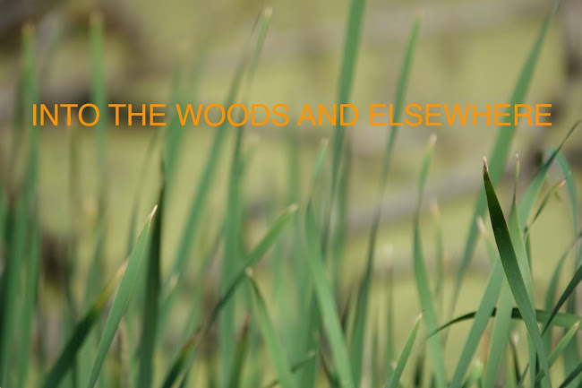 Into the Woods and Elsewhere