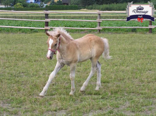 Horse Breeding For Beginners