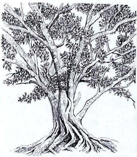 Desenho De Uma Folha De Arvore