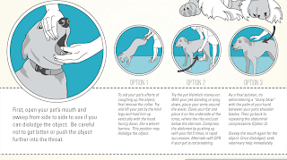 How to Perform Dog CPR - CPR for Dogs: A Step-by-Step Guide to Saving Your Dog's Life