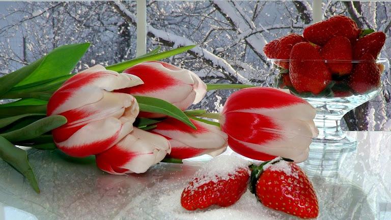 Tulips Flowers HD Wallpaper 4