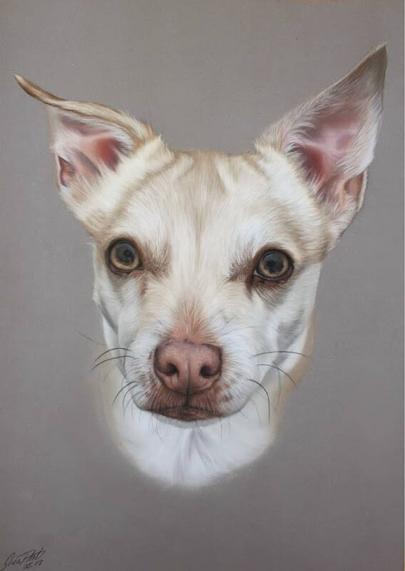 09-White-Chihuahua-10-Svea-T-Animal-Portrait-Drawings-and-an-Eye-www-designstack-co