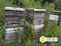 miel sin glifosato ecoapicultores ecoapi