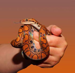 Khwab Mein Sanp Dekhna / Dreaming of Snake