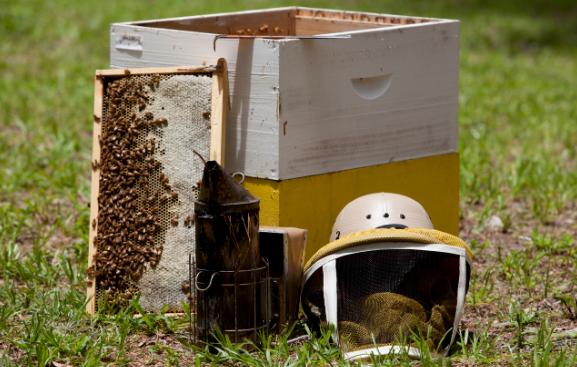 Πωλούνται μελίσσια και μελισσοκομικός εξοπλισμός στην Λευκάδα