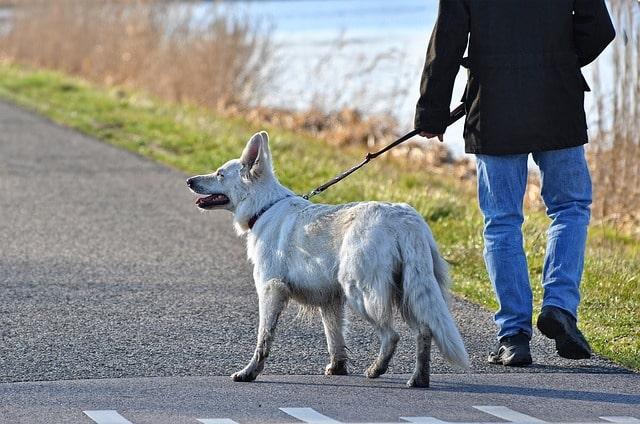 Promenade de chien: neuf conseils pour une meilleure promenade de chien