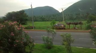 Flora on Vizag Tirupati highway