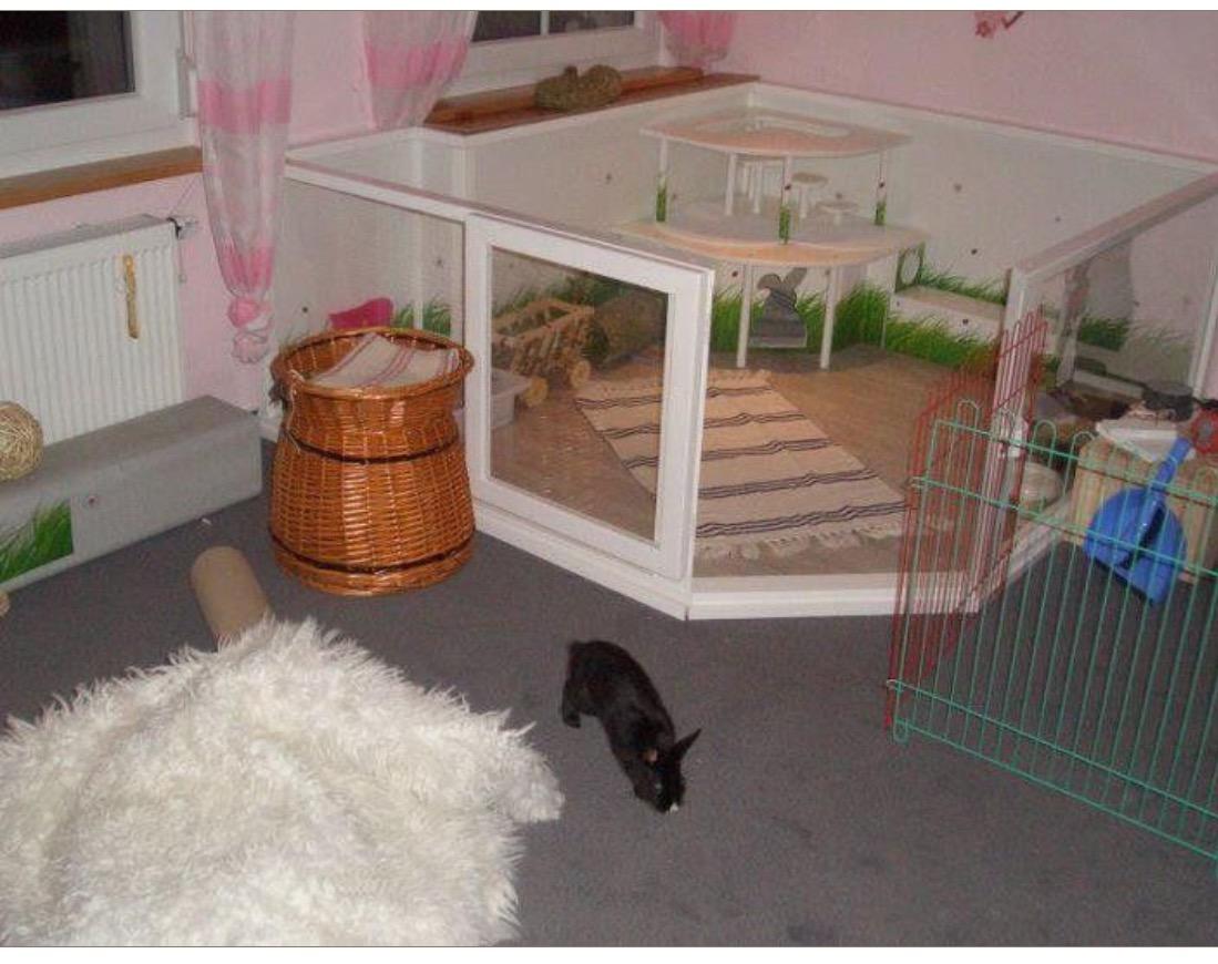 Housing Your Pet Rabbit