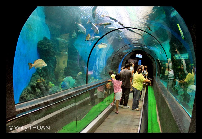 Phuket Aquarium, A fun way to spend an afternoon on the island