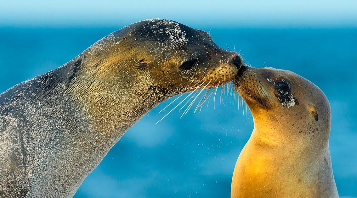 Galapagos vieta i fuochi d'artificio per sempre e non solo a Capodanno.
