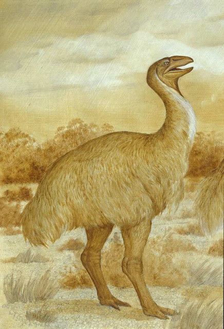 A case of mistaken identity for Australia's extinct big bird