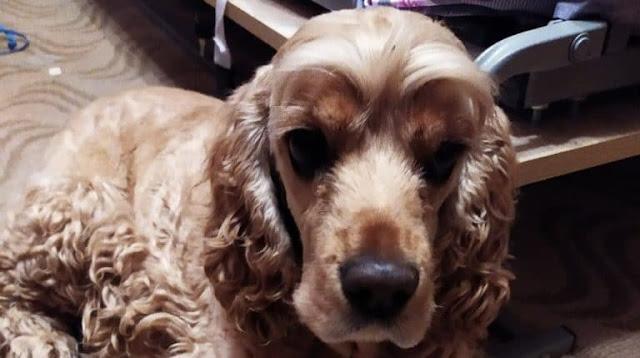 Оставленная людьми собака 3 недели голодала. Отчаявшись, она бежала навстречу грузовику
