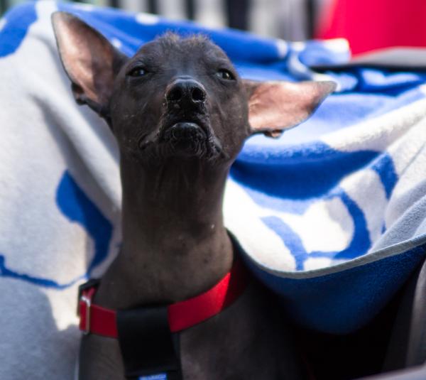 PauMau blogi nelkytplusbloggari nelkytplus nelkytplusblogit ruukki picnic 2015 ruotsinpyhtää strömforsin pirun karvaton perun karvaton koira