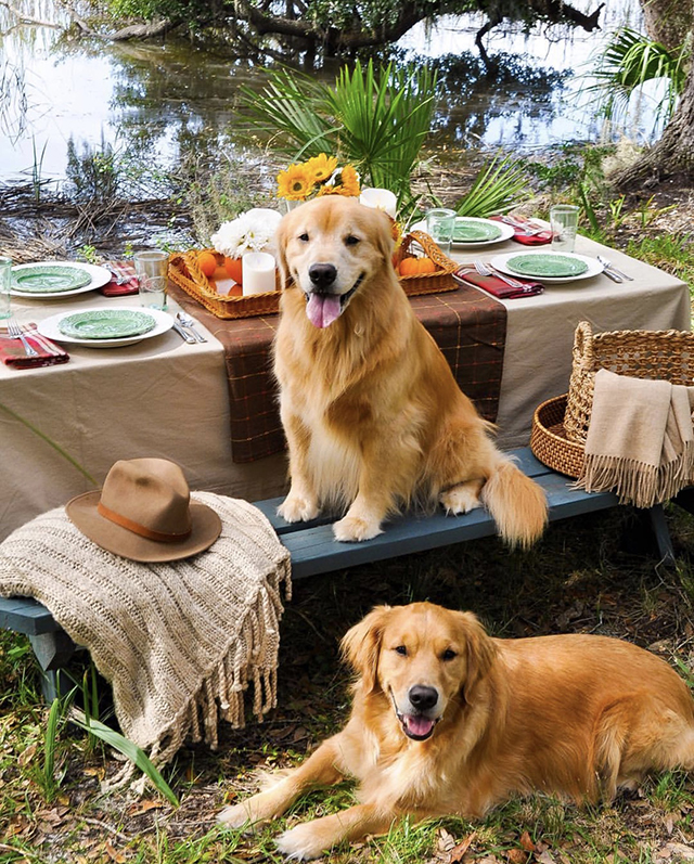 Golden Retrievers Picnic Table