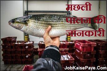 Fisheries Information