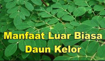 manfaat daun kelor buat kesehatan