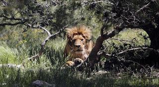حيوانات منقرضة حديثا,حيوانات منقرضة في السعودية,حيوانات منقرضة منذ ملايين السنين,حيوانات منقرضة وسبب انقراضها,حيوانات منقرضة واسمائها,حيوانات منقرضة فطحل,حيوانات منقرضة تعاود الظهور,حيوانات منقرضة تعود للحياة,حيوانات منقرضة - ويكيبيديا,حيوانات منقرضة يوتيوب,حيوان منقرض يشبه الفيل,حيوان منقرض يشبه الفيل لعبة وصلة,حيوان منقرض يبدا بحرف الميم,حيوان منقرض يشبه الاسد,حيوان منقرض يشبه النمر,حيوان منقرض يشبه الفيل ما اسمه,حيوان منقرض يشبه الفيل من اربع حروف,حيوانات منقرضة ويكيبيديا,حيوانات منقرضة وسبب انقراضها بالانجليزي,حيوانات منقرضة وحيوانات مهددة بالانقراض,حيوانات منقرضة ومهددة بالانقراض,حيوانات منقرضة واسمائها بالمغرب,حيوانات منقرضة ومعلومات عنها,ما هي حيوانات منقرضة,حيوانات منقرضة ناشيونال جيوغرافيك,حيوانات منقرضة نحمد الله على انقراضها,حيوان منقرض نمر,حيوان منقرض ن,نوع حيوانات منقرضة,حيوانات منقرضة مفترسة,حيوانات منقرضة منذ الاف السنين,حيوانات منقرضة من 5 حروف,حيوانات منقرضة من 9 حروف,حيوانات منقرضة ما قبل التاريخ,حيوانات منقرضة موضوع,حيوانات منقرضة مخيفة,حيوانات منقرضة م,حيوانات منقرضة لا يعرفها الكثيرون,حيوانات منقرضة لعبه سبع كلمات,حيوان منقرض لغز رقم 7,حيوان منقرض لعبة وصلة,الحيوانات المنقرضة للاطفال,حيوان منقرض له راس ذئب,حيوان منقرض له قرون طويلة,حيوان منقرض لغز,الحيوانات منقرضة,الحيوانات منقرضة وسبب انقراضها,ما هي الحيوانات منقرضة,اقوى الحيوانات منقرضة,معلومات عن الحيوانات منقرضة,أسماء الحيوانات منقرضة,الحيوانات المهددة بالانقراض منقرضة,حيوانات منقرضة كبر عقلك,حيوانات منقرضة كانت تعيش في الجزائر,حيوان منقرض كلمات متقاطعة,حيوان منقرض كلمات,حيوان منقرض كلمات متقاطعة وصلة,حيوان كبير منقرض,حيوانات منقرضة قريباً,حيوانات منقرضة قبل التاريخ,حيوانات منقرضة قديما,حيوانات منقرضة قد تعود للحياة قريبا,حيوانات منقرضة قد تعود للحياة,حيوانات منقرضة قديم,حيوانات منقرضه قد تعود للحياه من جديد,حيوانات منقرضة قد,حيوانات منقرضة في مصر,حيوانات منقرضة في الجزائر,حيوانات منقرضة في سوريا,حيوانات منقرضة في سلطنة عمان,حيوانات منقرضة في شبه الجزيرة العربية,حيوانات منقرضة في الاردن,حيوانات منقرضة غريبة,حيوانات غير منقرضة,حيوانات انقرضت غير الديناصور,حيوانات غريبة انقرضت,حيوانات منقرضة ع