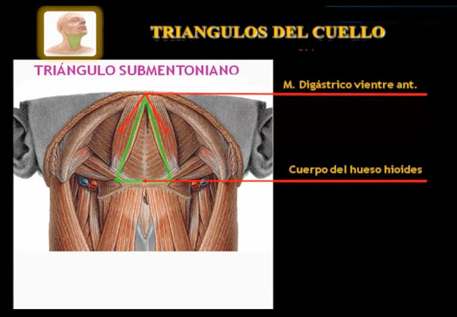 Triángulo submentoniano o suprahioideo