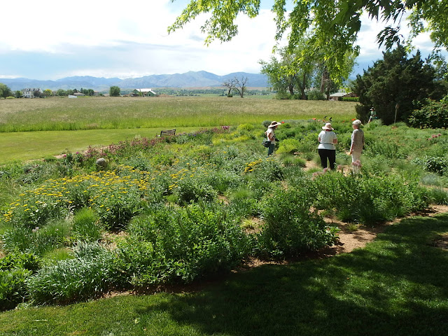 Prairie planting with mountain view