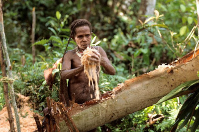 Inside The Indonesian Cannibalistic Tribe That Live In Treehouses & Not Aware Of The Outside World
