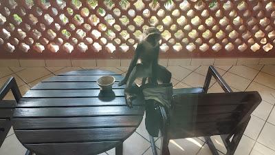 małpy na tarasie