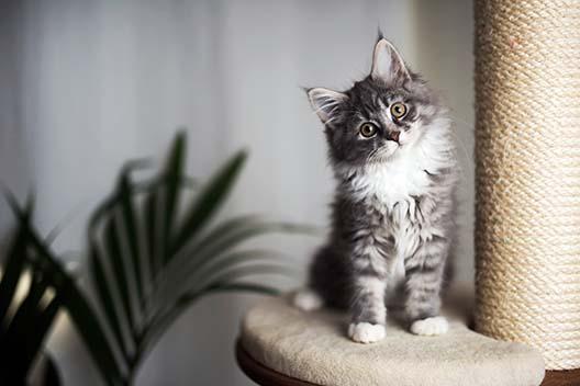 Kiedy kot dorasta?