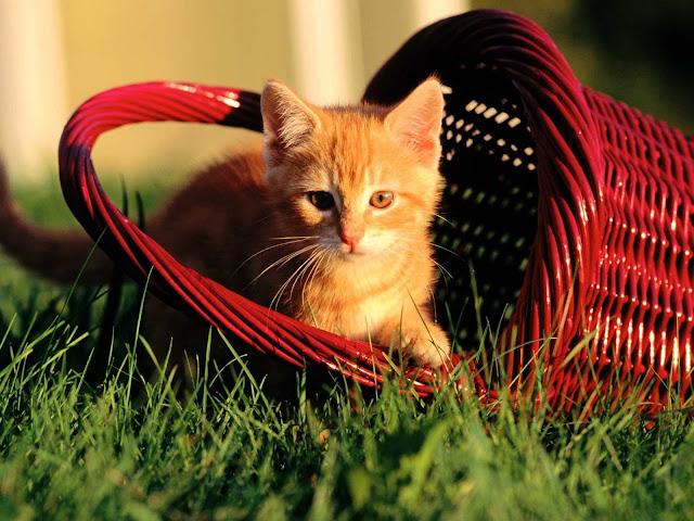 صور قطط جميلة hd | اجمل صور القطط في العالم 2020