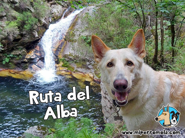 Can de Palleiro en la Ruta del Alba con Perros