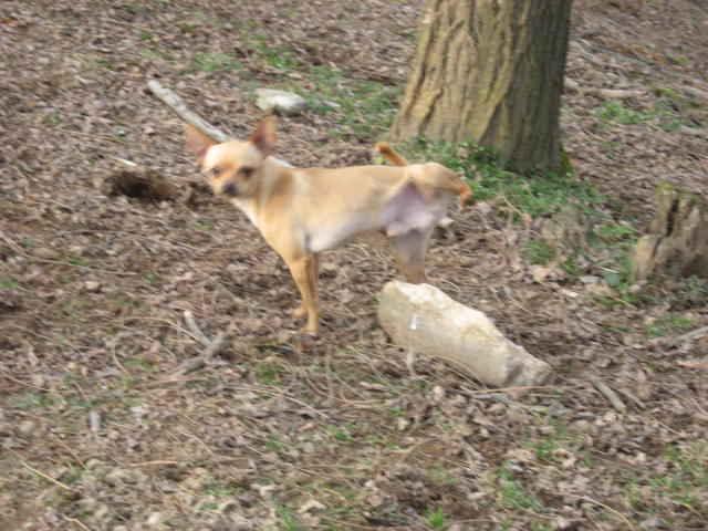 addestramento ed educazione dei cuccioli e del cane adulto
