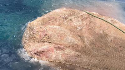 IMG 20200904 WA0011 - Como todos los años los arrastreros de Santa Pola cogiendo atunes en descomposición