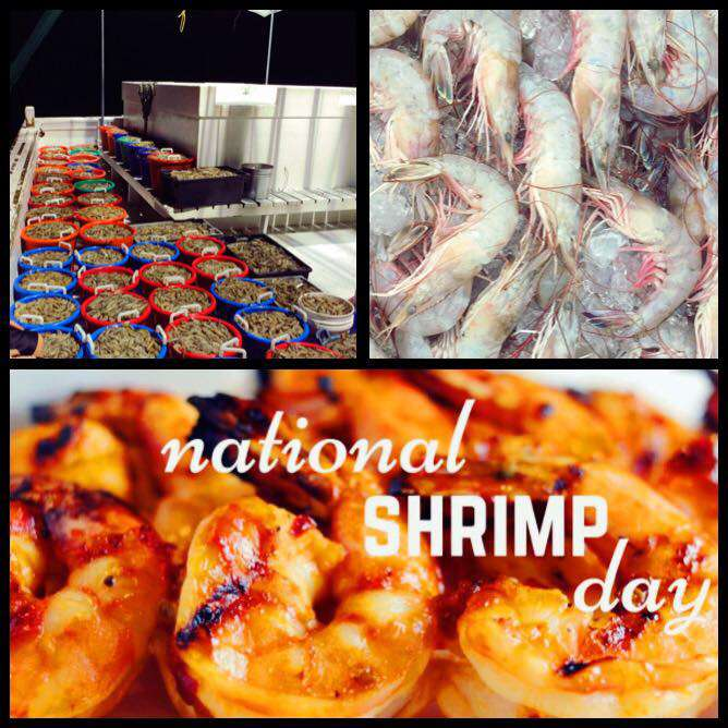 National Shrimp Day Wishes for Whatsapp