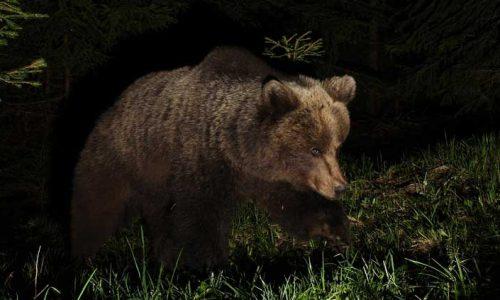 Την ξαφνική κι αναπάντεχη συνάντηση που είχε με την αρκούδα καθώς οδηγούσε κατέγραψε αναγνώστης μας από τα χωριά της Κόνιτσας.