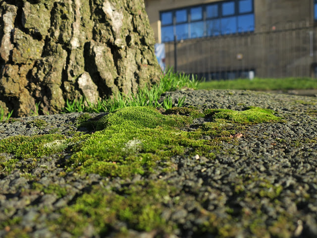 Moss growing at foot of tree