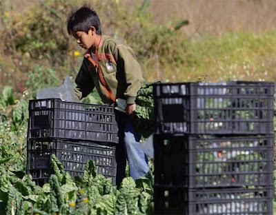 Esclavos en el mundo: Niño trabajando en el campo