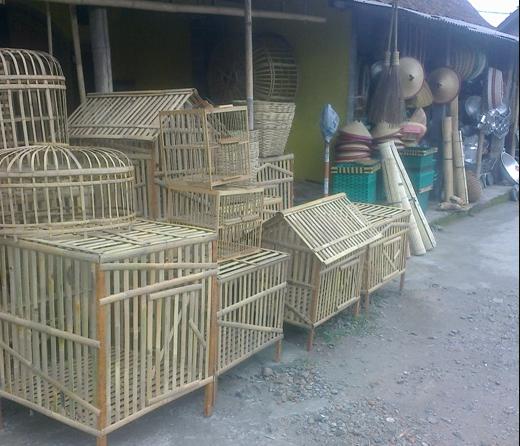 Contoh Kandang Ayam Bangkok