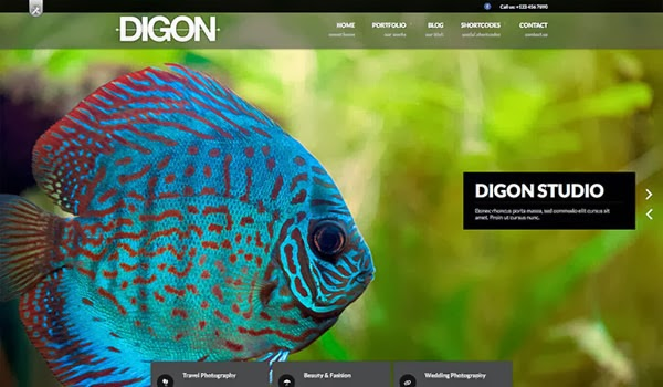 digonsingle-page-Theme