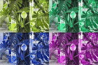 نبات القفص الصدري