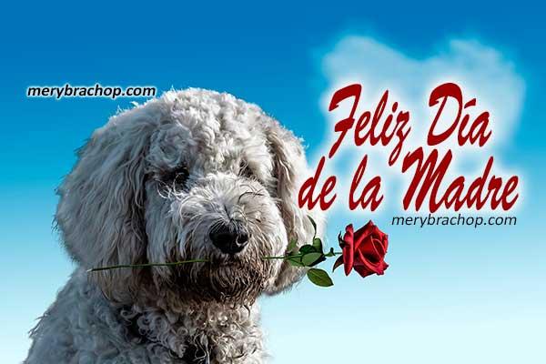 Feliz día de la Madre, frases cristianas, mensajes bonitos para felicitar a la mamá, lindos pensamientos por Mery Bracho.