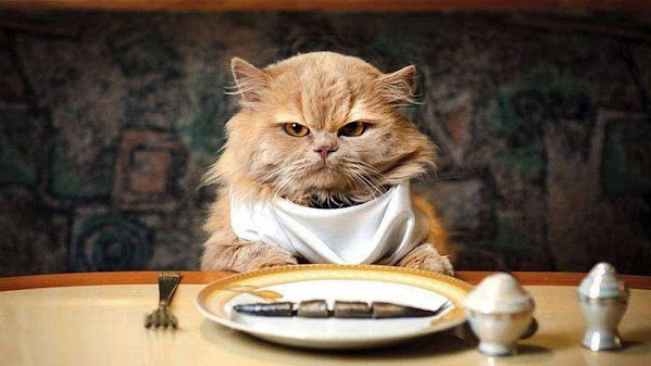 Human Foods Poisonous to Cats