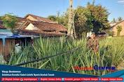 Warga Bondowoso Keluhkan Kondisi Kabel Listrik Nyaris Sentuh Tanah