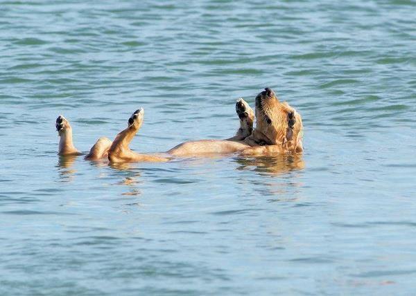 Τι προσέχουμε αν πάμε το σκύλο μας για μπάνιο στη θάλασσα