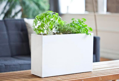 Best Ways To Grow Herbs Indoors - Hydroponic Planter